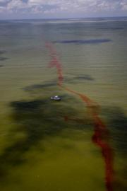 This BP handout image shows a boat scouring the surface of the Gulf of Mexico off the Grand Isle area of Louisiana
