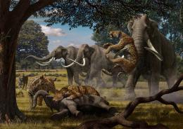 'Trophic cascades' of disruption may include loss of woolly mammoth, saber-toothed cat
