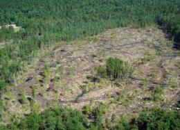 Turning forests into fuel: New report outlines promise and limits of biomass energy in the Northeast