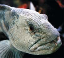 UiS develops global fish price index