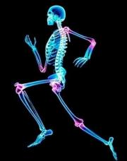 Weight-bearing exercise does not prevent increased bone turnover during weight loss