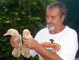 Wildlife expert Harry Kunz holding two rare blue-winged albino kookaburras